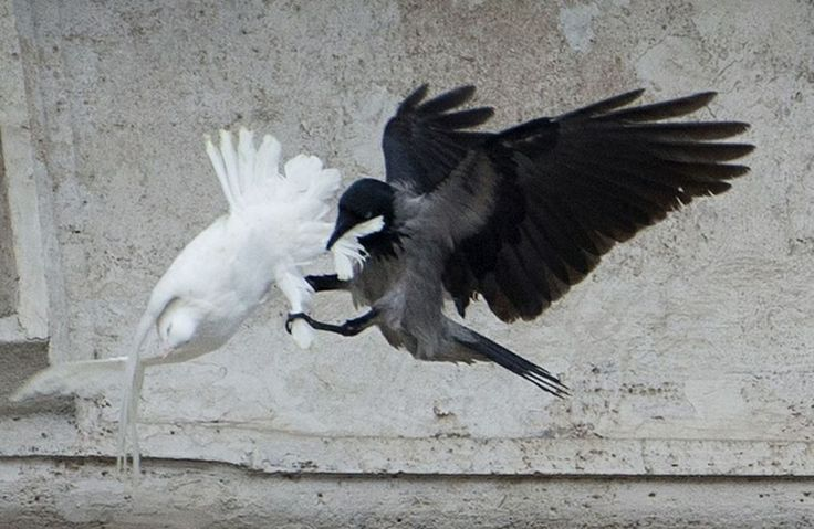 DOVES ATTACKED AT VATICAN-Dan Bidondi decodes it's prophetic meaning ...