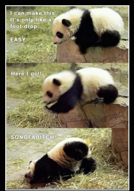 Funny panda memes - photo#1