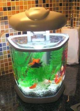 weird fish tanks ideas | weird fish tanks | Pinterest