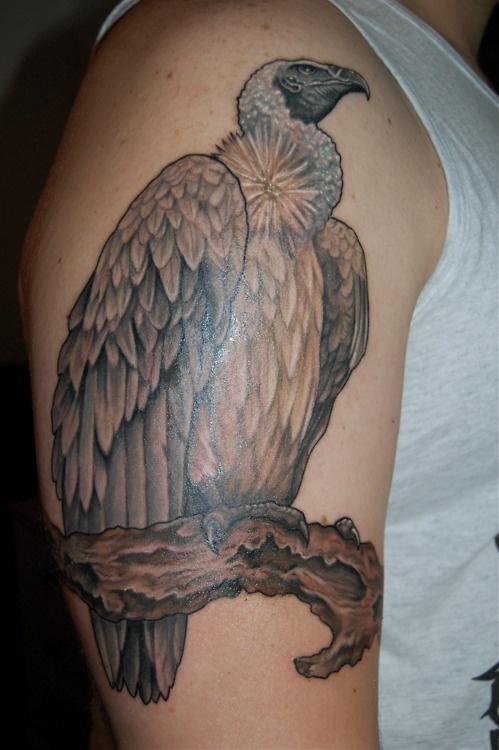 vulture tattoo tattoos pinterest
