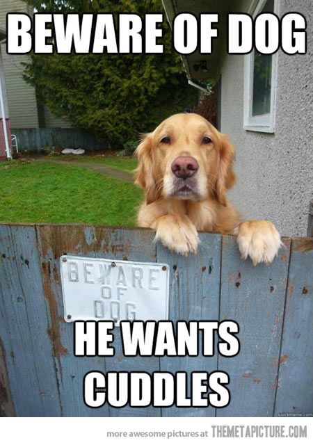 Beware of dog...he wants cuddles!
