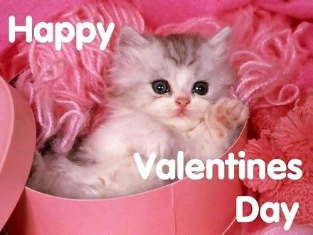 Sweet kitty for Valentines Day