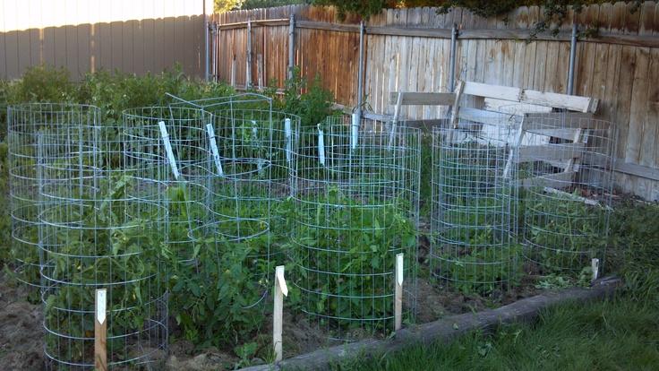 diy tomato cage gardening pinterest. Black Bedroom Furniture Sets. Home Design Ideas