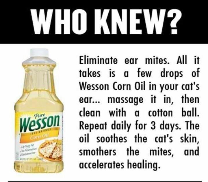 Cat Ear Mites Home Treatment