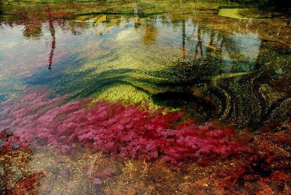 Rio de los siete colores - Caño Cristales, Colombia