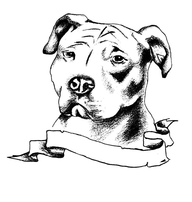 Famous Pencil Drawings of Pit Bulls | Email This BlogThis! Share to ...