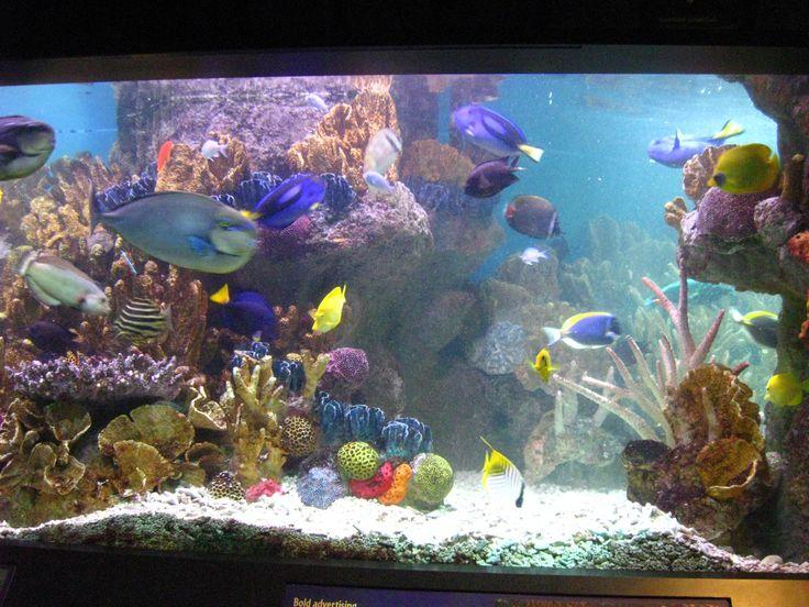 The Aquarium Boston