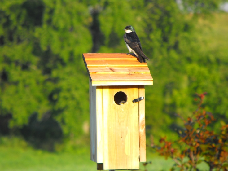 Tree Swallow Houses 110