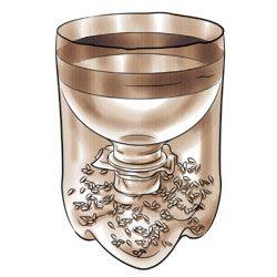 Trampa para mosquitos hecho en casa