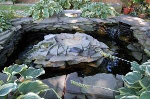 R Turtles Good Pets Back Yard Turtle Ponds