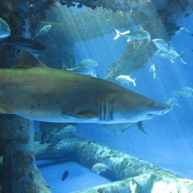 Texas State Aquarium Corpus Christi Tx Favorite Places