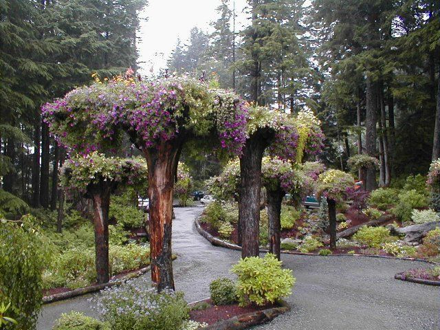 Upside down tree planters landscaping gardening pinterest - Upside down gardening ...