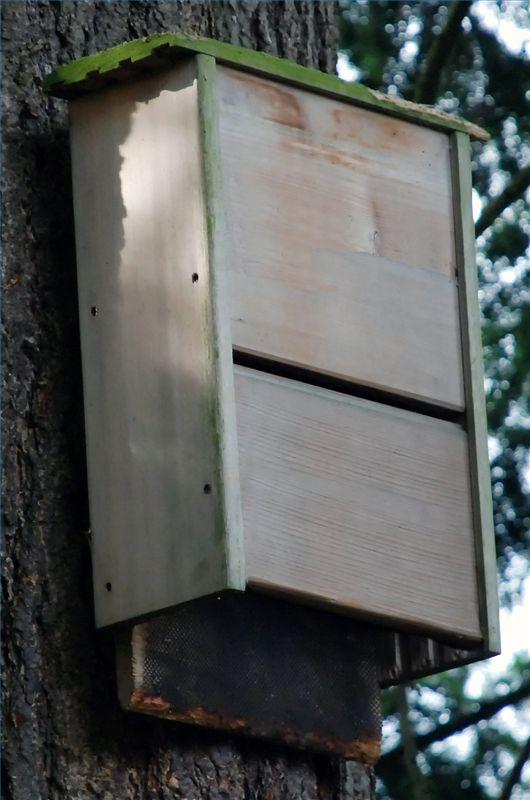 How to make bat house for Bat condo