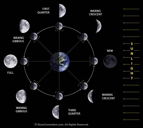 """Phases of the Moon. A solar eclipse can only occur at the new Moon because that's the only time that Sun, Moon and Earth could line up with the Moon blocking the Sun from our view.  ©Mona Evans, """"Solar Eclipses"""" http://www.bellaonline.com/articles/art28395.asp"""