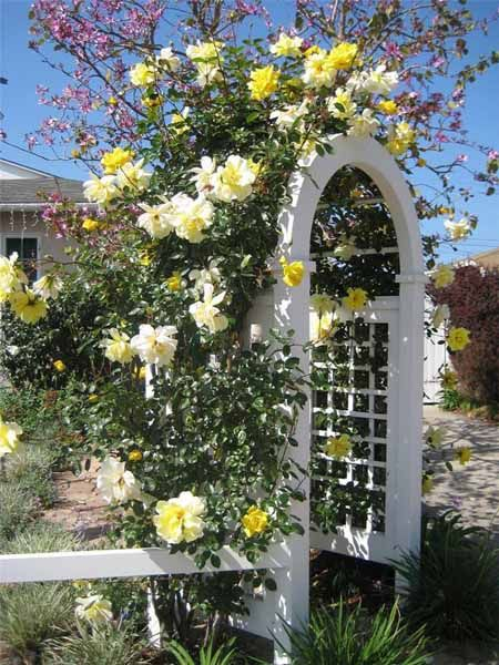roses for beautiful outdoor decor charming garden designs