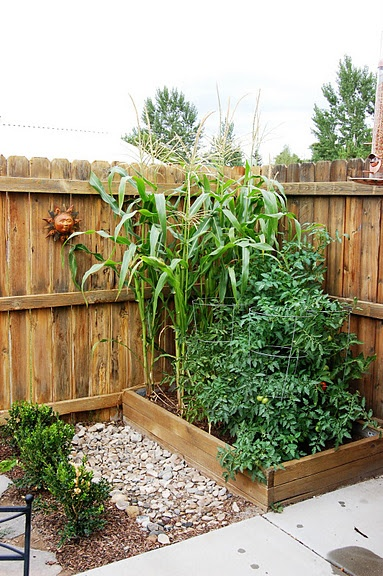 Pinterest Veggie Garden Ideas Photograph Vegetable Garden