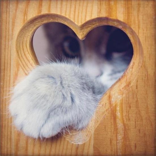 kitty   heart