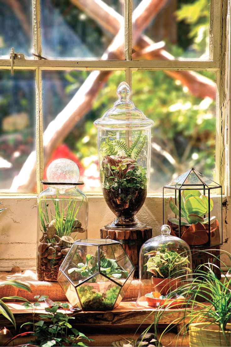 Growing Under Glass | Terrariums  by Charlie Thigpen      Photography by Chuck St. John    #terrarium #DIY #Gardening #indoor