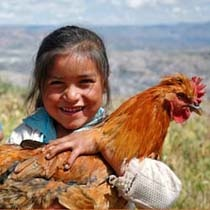 The gift of a Chicken and chicken feed can help a family produce nutritious eggs, manure and offsprings to sell for extra income. And this vital asset to someone in a poor rural community only costs $10.