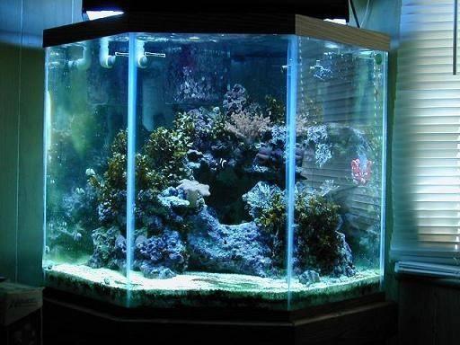 44 gal pentagon aquarium for corner cool ideas pinterest for Pentagon fish tank