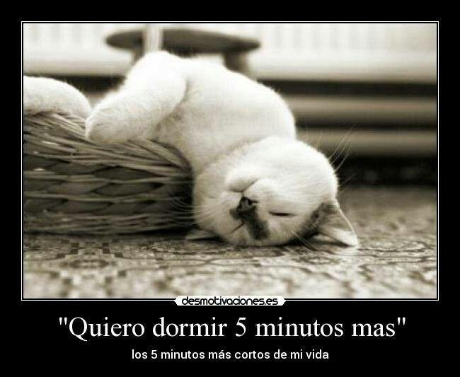 Quiero dormir.... | Amimales | Pinterest