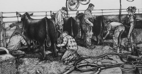 show cattle art by amanda raithel cattle photography and