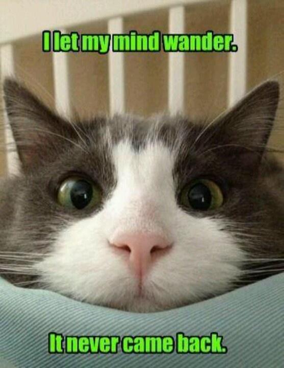 damp cat twitter