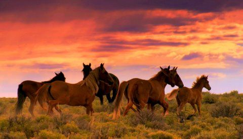 What is a group of horses called? - m