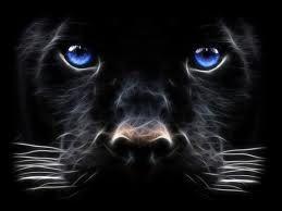 black - blue eyes