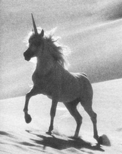 Unicorn in the Desert