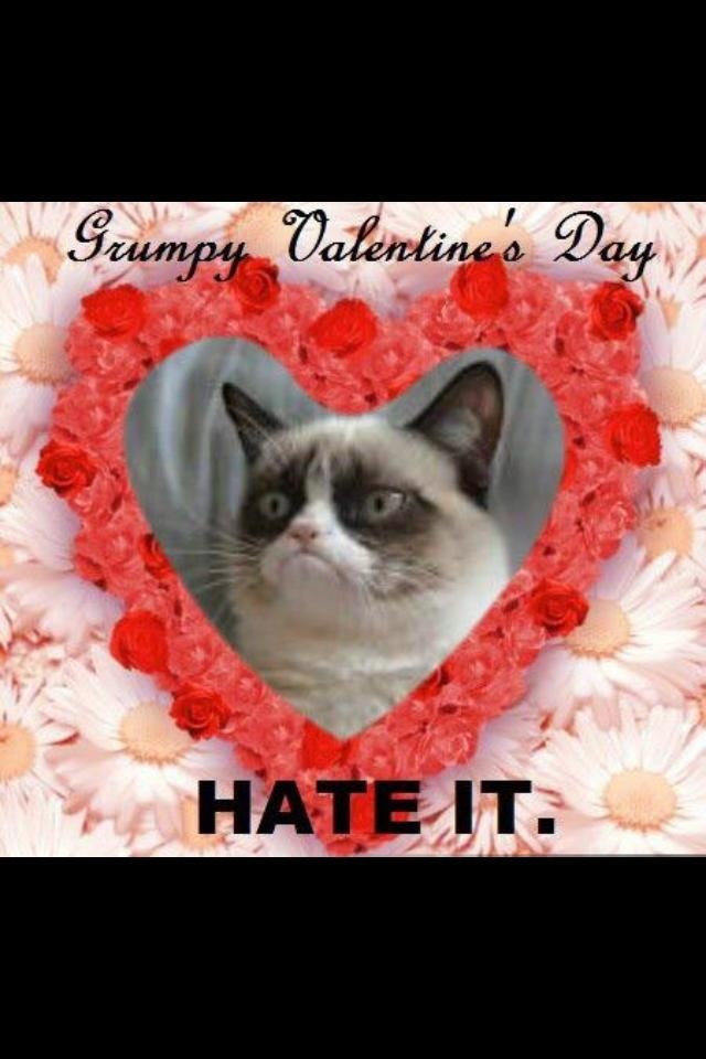 happy valentines day cat