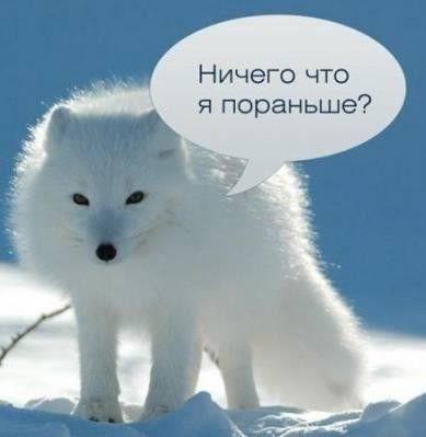 Киевляне побеждают снег с помощью