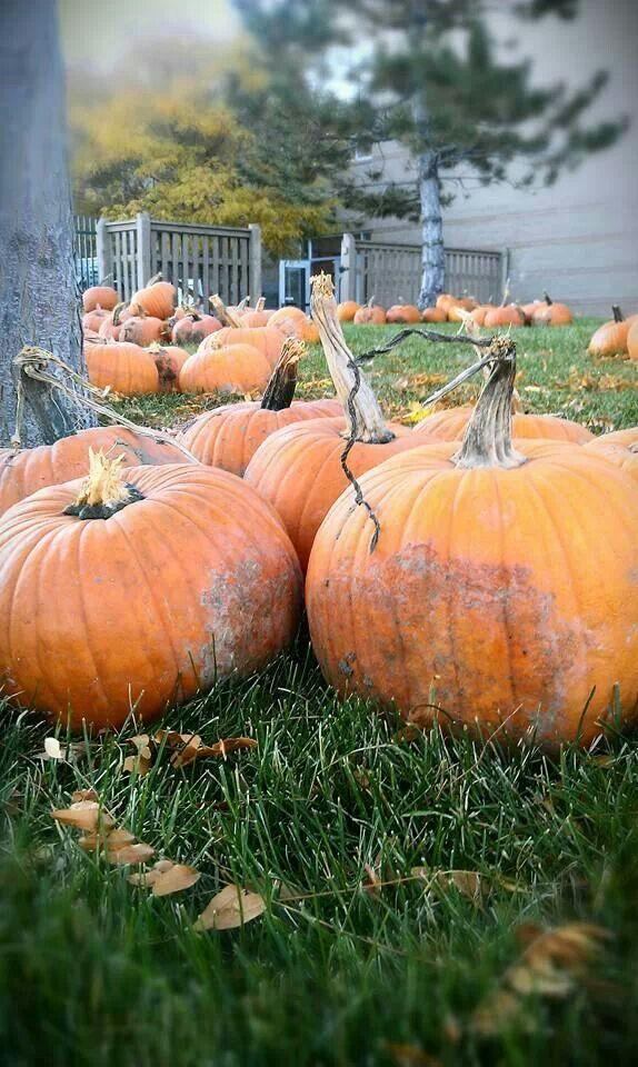 Colorado Pumpkin Patch