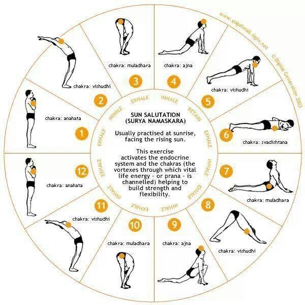 YOGA: Sun Salutation Chart | Muscles in Motion | Pinterest