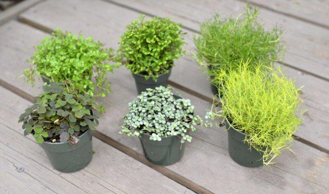 Mini garden plants terrarium plants mcdonald garden center miniature gardens pinterest - Small plants for indoors ...