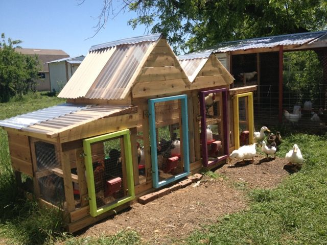 Chicken duck house chickens pinterest for Chicken and duck coop
