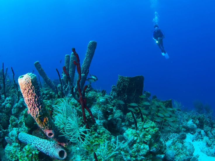 Deep sea diving deep sea technical diving - Dive jump reporting system ...