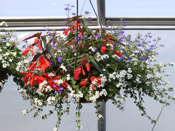 Flowers For Hanging Baskets In Part Shade : Pin by linda sumruld on hanging baskets