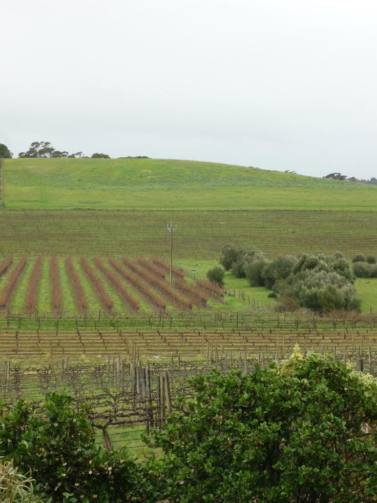 Mclaren Vale Australia  City pictures : McLaren Vale, South Australia | wine | Pinterest