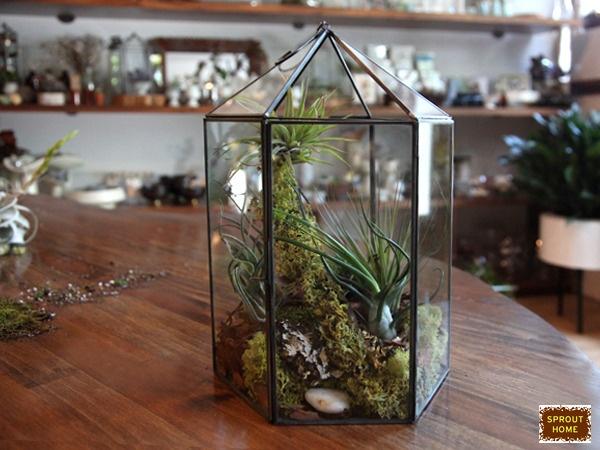 Terrarium Air Plant Project Ideas Pinterest