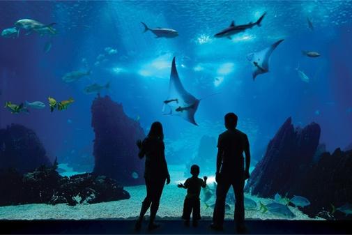 Marine Life Park- Dive into Marine Life Park, the world?s largest ...