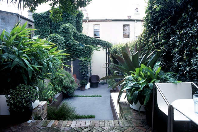 Courtyard courtyards pinterest for Courtyard landscaping sydney