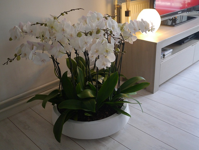 Plant Ideeen Woonkamer : Beautiful Orchid