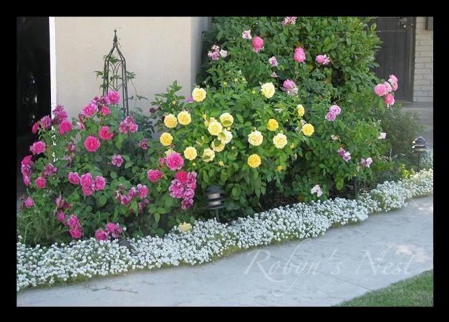 Roses for Flower bed planner
