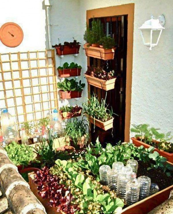 Vegetable small home garden garden ideas pinterest for Small vegetable garden