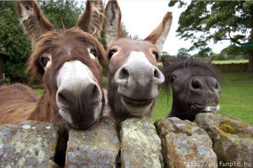 hee hahaha! #donkeys