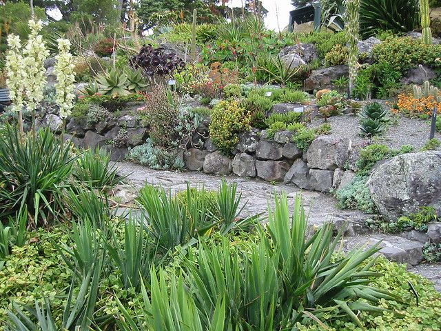 Succulent rock garden Outside Pinterest