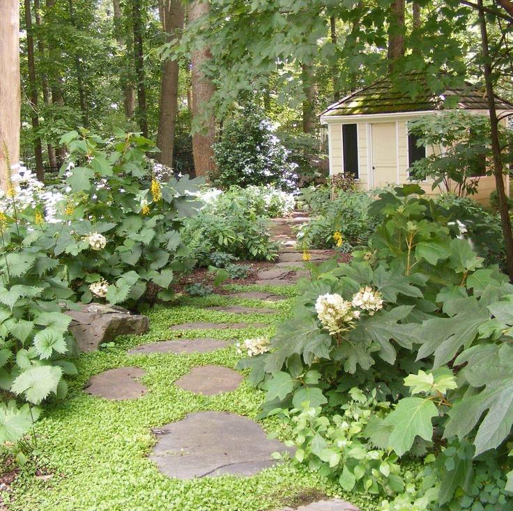 Woodland garden woodland gardens pinterest for Woodland garden designs