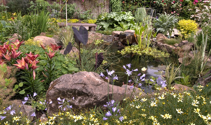 Pond plant ideas pond pinterest for Planting around a pond suggestions