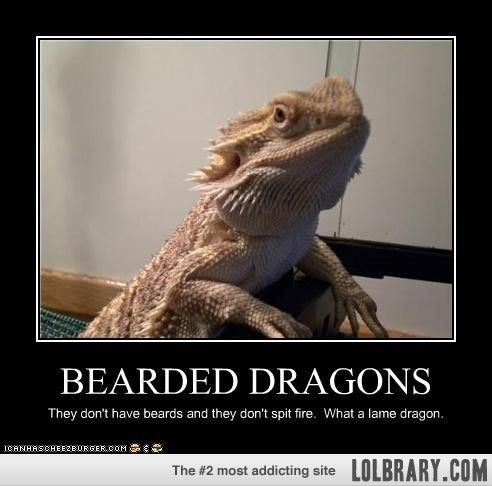 Bearded Dragons | Animals & other little creatures I Love ...